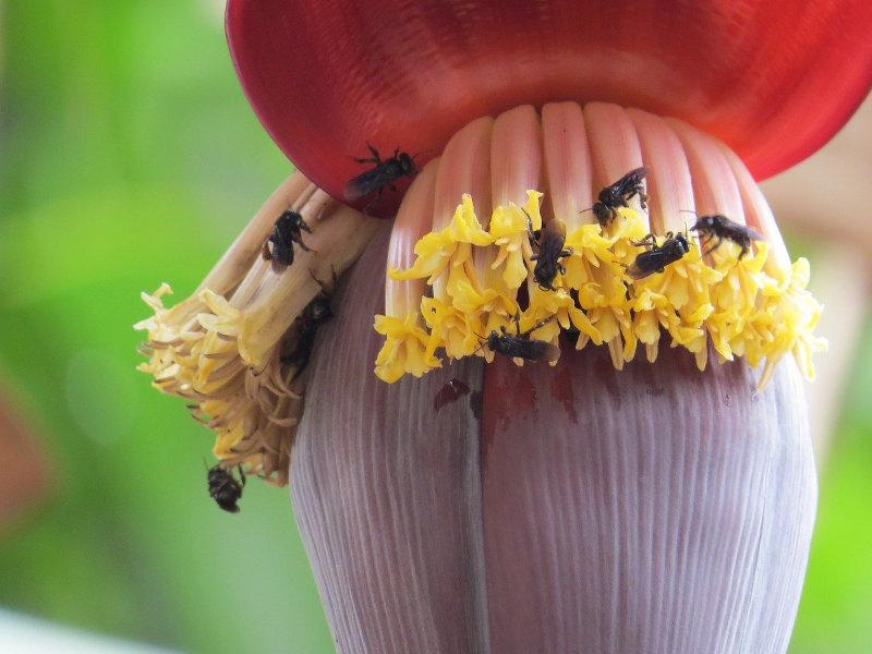 Fruchtfliegen, welche sich um eine Pflanze ansammeln
