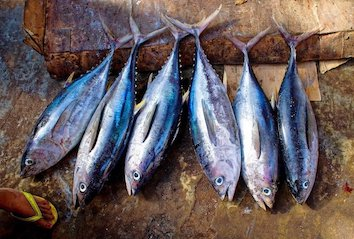 fischpfanne-thunfische